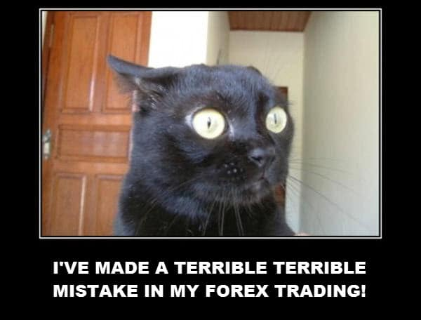 stressed forex cat