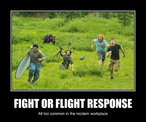 the fight or flight response can Understanding dog fight and flight response is important if you're planning on learning more about your dog behavior learn how fight & flight responses are important in changing dog behavior.