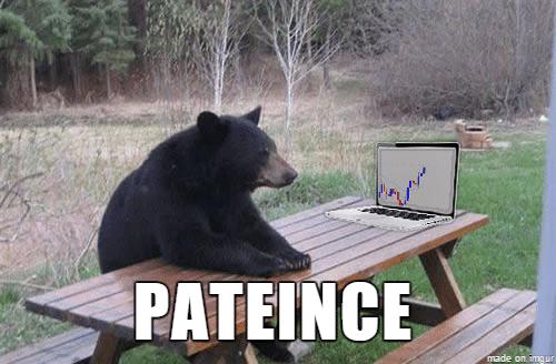 bear patience