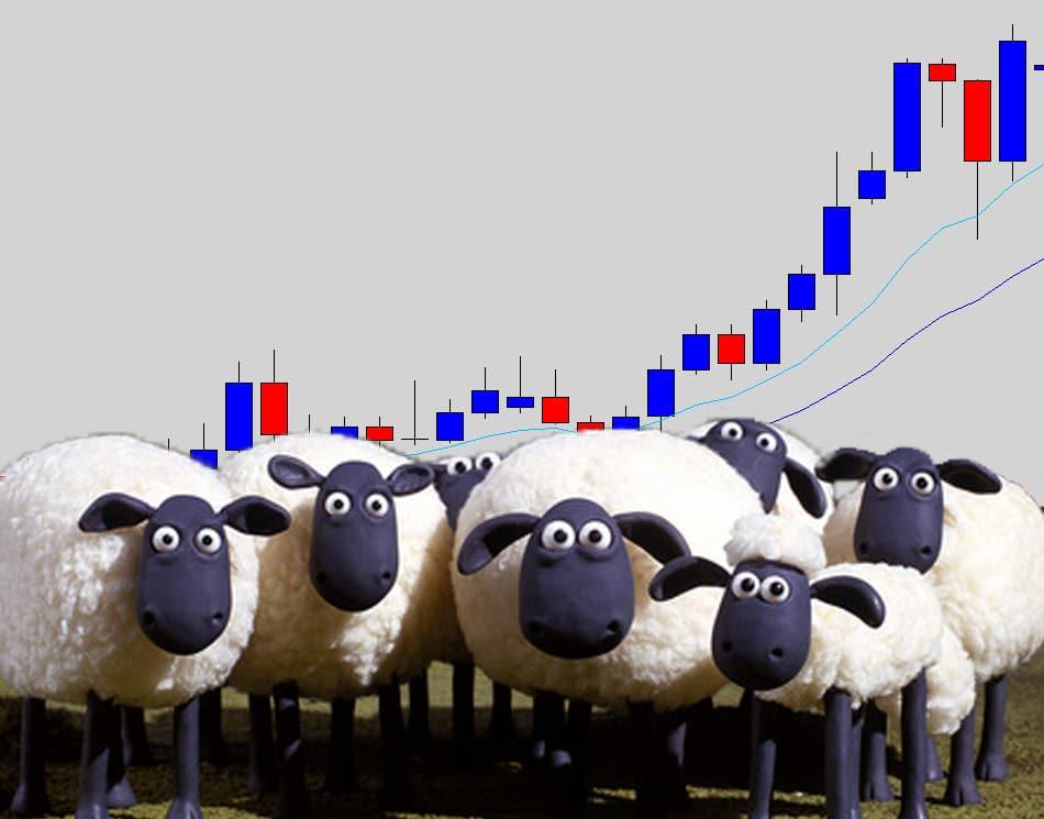chart sheep